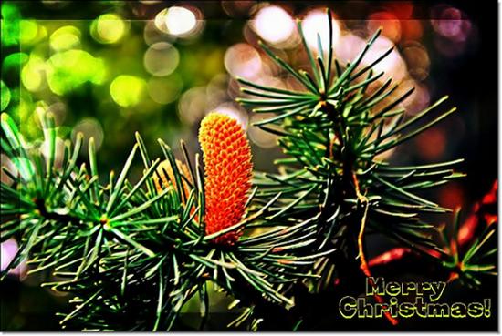 Buon Natale a tutti!!!