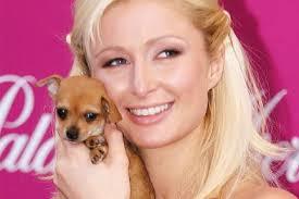 Una villa extra lusso per i cani di Paris Hilton
