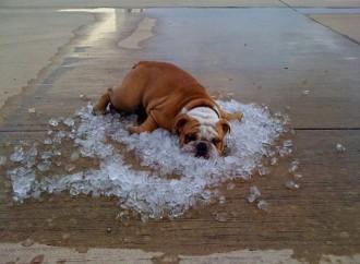 Piccoli trucchi per sopravvivere al caldo