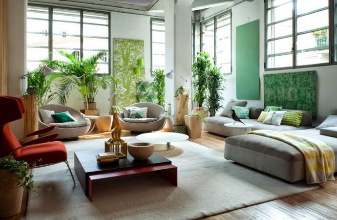 10 piante per depurare casa