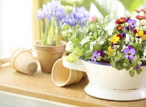 Primavera in casa