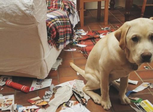 Cosa fare in casa quando arriva Lui: il cane