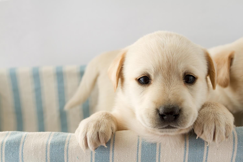 guida-ai-cuccioli-di-cane-1500x1000