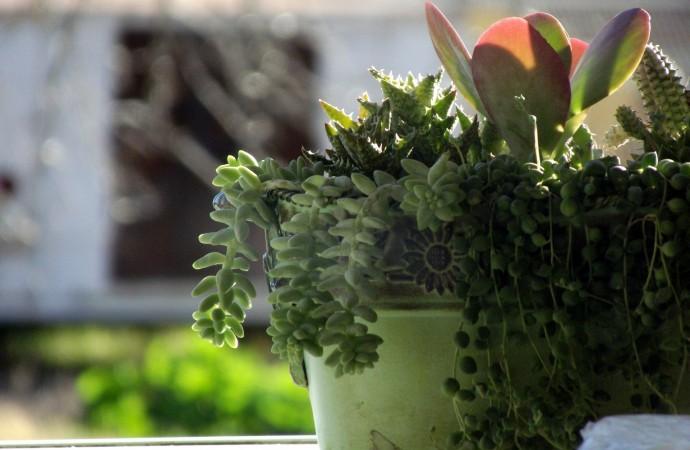 Cose di casa : la cura delle piante in inverno